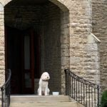 The dog, a main character, in front of the Colonel Reily House on Liddle Lane